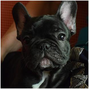 Cucciolo-home